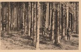 54 -nancy - école Nationale Des Eaux Et Forêts - Inventaire De Peuplement Dand Une Sapinières - Autres