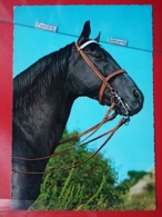 KOV 505-9 - HORSE, CHEVAL, - Paarden