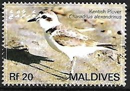 MALDIVES - MNH 2007 :    Kentish Plover  -  Charadrius Alexandrinus - Other