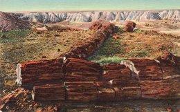 THE TWIN SISTERS-PETRIFIED FOREST-ARIZONA - Stati Uniti