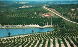 CITRUS GROVES AND LAKES-FLORIDA - Fort Lauderdale