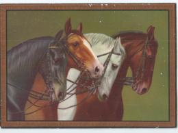 Cheval - Horse - Paard - D.R.G.M. Nr 29665 - Pferde
