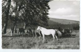 Cheval - Horse - Paard - Pferd - Nr 45 - Horses
