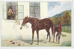 Cheval - Horse - Paard - Pferd - Serie 5 Lieblinge Nr 3 - Chevaux