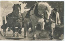 Cheval - Horse - Paard - Pferd - Photo Hoffmann Munchen - 1943 - Horses