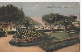 Montpellier- Esplanade - Montpellier