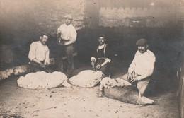 CARTE PHOTO  (28) - Tonte De Mouton (entre Roinville Et Auneau) - Non Classés