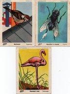 Lot De 3 Images D' école - Oiseaux, Insecte  - - Alte Papiere