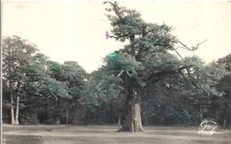 CPSM Mainville Forêt De Sénart Le Chêne D'Antin - France