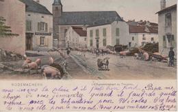 57 - RODEMACK - LE RASSEMBLEMENT DU TROUPEAU - COULEURS - France