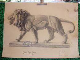 Konigl. Technische Hochschule Munchen Vorprufung 1906, Paul Dfauer Professor, Fritz Huber, Fusain Lion (20-393) - Pastel