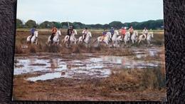 CPM CHEVAL CHEVAUX  LA CAMARGUE MANADIER J C GROUL SA FAMILLE ET SES AMIS PRETS POUR LE TRI DE TAUREAUX ED DU SOLEIL - Horses
