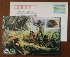 Skull Fossil Homo Erectus Pekinensis,use Fire,using Stone Tools,dinosaur,Paleontology Museum,CN 19 Beijing Ape Man PSC - Archaeology
