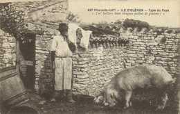 """ILE D'OLERON  Type Du Pays """"I'mbaillera Beun Lieuques Pothées De Gratons !"""" Cochon  RV - Ile D'Oléron"""