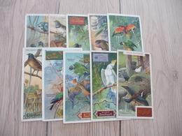 Chromo Ancien Publicitaire  Chocolat Suchard Oiseaux Birds - Suchard