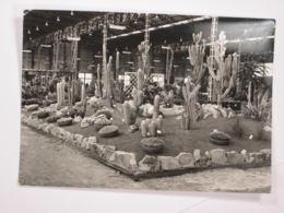 Floralies Internationales Liégeoises 1968 - Belgique