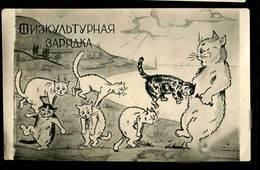 Chat Postсаrd Humour - Katzen