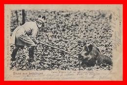 CPA  LETZLINGEN (Allemagne)  Gruss Aus Letzlingen.  Kaiser Wilhelm II. In Der Letzlinger Heide, Sanglier...K825 - Otros