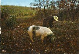 Chercheur De Truffes   ..edit  Iris - Farmers