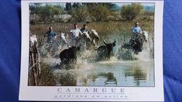 CPM CHEVAL CHEVAUX LA CAMARGUE GARDIANS EN ACTION ED DU BOUMIAN AJAX PHOTO AUBANEL TAUREAUX - Horses