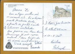 Obliteração De Santo António Da Serra, Santa Cruz. Machico. Ilha Da Madeira. Lobo Marinho. Sea Lion. Zee Wolf. Seewolf. - 1910-... República