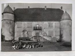 Photo Diedendorf. Ferme. Oies. 15.5x10.5cm - Lieux