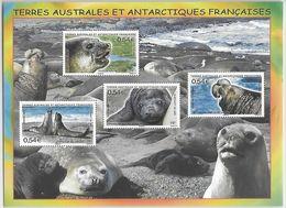 TAAF   2008   BLOC N° 19 NEUF **  MNH     ELEPHANT DE MER - Blocs-feuillets