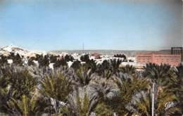 GHARDAIA - Les Jardins - Ghardaïa