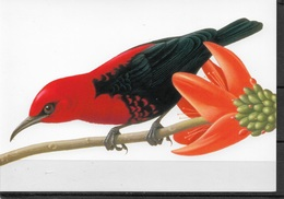 US Post Card, Birds, Cardinal Honeyeater 20c,VF Unused, Unposted !!! - Birds