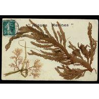 Algues Marines Séchées - Otros