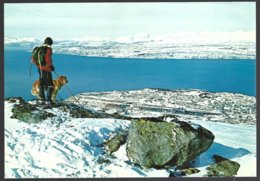 PC  AUNE F-8307-7- Norway, Narvik View Of The Town+skieur Et Chien.  Unused - Norvège