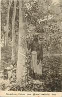 Ref Y643- Indonesie -indonesia -java -arbres -arbre -caoutchouc Cultuur - Toko Takahashi -solo-culture Du Caoutchouc  - - Indonesia