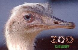 Zoo Chleby (CZ) - Rhea - Animales & Fauna