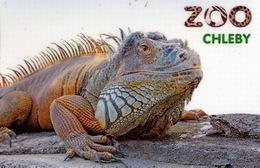Zoo Chleby (CZ) - Iguana - Animales & Fauna