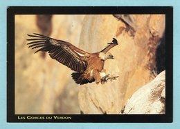 CP - Animaux - Oiseaux - Atterrissage Du Vautour Fauve - Les Gorges Du Verdon - Birds