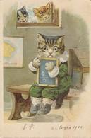 Animali Abbigliati - Gatti - Cats -  Chats -  Gatto A Scuola Con Lavagna  - Bella - Animali Abbigliati