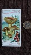 IMAGE CHAMPIGNON BON TRICHOLOME EQUESTRE  CHOCOLAT D AIGUEBELLE  FORMAT 5.5 PAR 10.7 CM - Vieux Papiers
