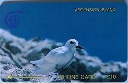 ASCENCION - Phonecard  -  Cable § Wireless  - Bird White Tern  -  £10 - Ascension