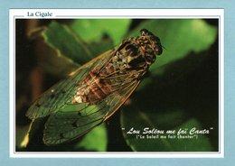 CP - Animaux - Insectes - La Cigale - La Soleil Me Fait Chanter - Insects