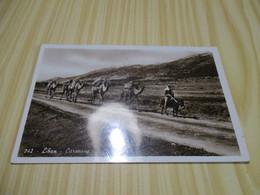 Liban - Caravane. - Liban