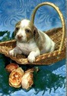 CHIOT DANS SA PANIERE - Honden