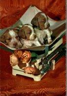 CHIOTS DANS LA PANIERE - Honden