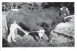 """44- Ste LUCE - T.B. Vue Du Taureau """" HUTAVI """" - Union Coop. Agricoles Elevage / Inséminat. Arftific. De LOIRE ATLANTIQUE - France"""