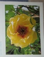 Petit Calendrier Poche 2002   Fleur Pivoine Mine D'or - Pharmacie Brest - Calendriers