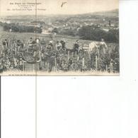 51-LA CHAMPAGNE LES VENDANGES - Frankreich