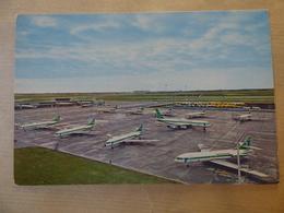 AEROPORT / AIRPORT / FLUGHAFEN     SCHIPOL   FLOTTE DE LA TRANSAVIA HOLLAND - Aérodromes