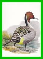 BUZIN - 4091 Canard Pilet / Pijlstaart - 1985-.. Birds (Buzin)