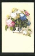 Künstler-AK Meissner & Buch (M&B) Nr. 2436: Verschieden Farbige Hortensien In Einem Hübschen Topf - Other Illustrators