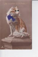 Je Porte Bonheur : Beau Chat Roux Et Blanc Avec Des Yeux En Verre Et Petit Noeud - Katten