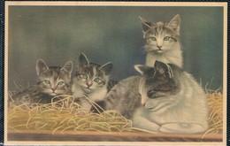 4 Chats -  Kitten,cats -kleine Katzen- Poesjes - Cats